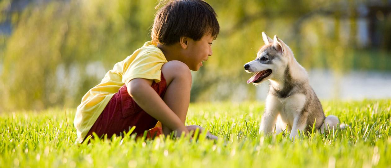 pet allergy, pets and allergies, pet allergen, cats ...