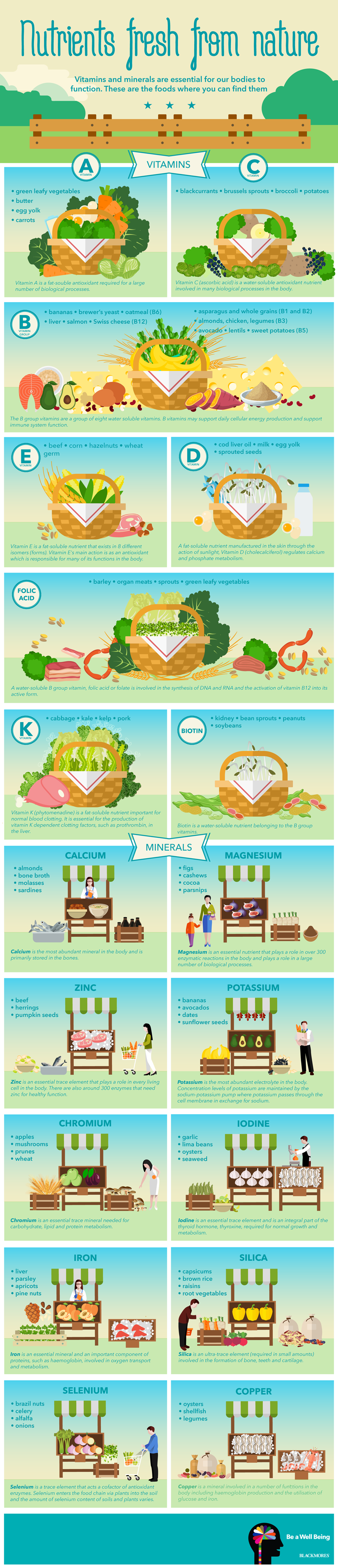 Image result for Vitamins And Minerals Infographic