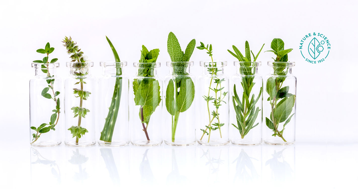 Medicinal herbs in glass bottles on a white background