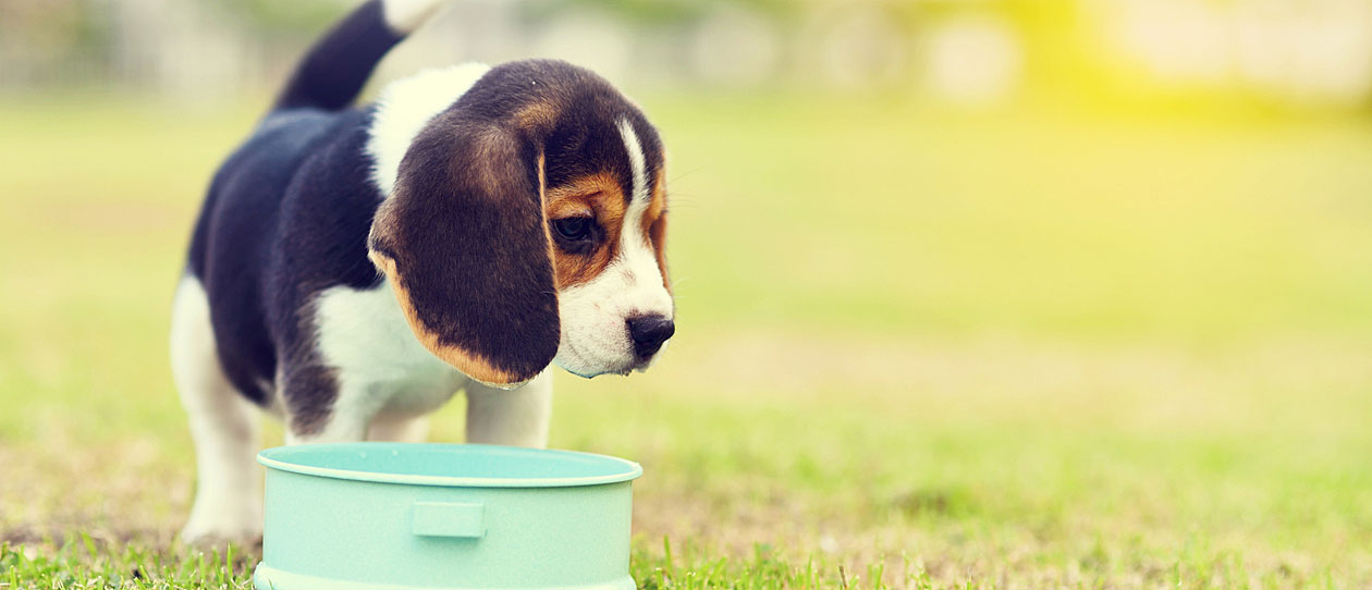 Puppy eating from dog bowl | PAW by Blackmores