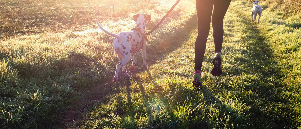 10-unexepected-breeds-that-make-great-running-mates2-main