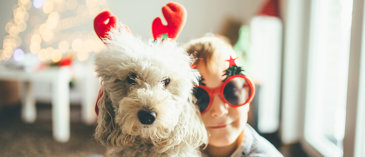 6 ways to indulge your pooch this Christmas