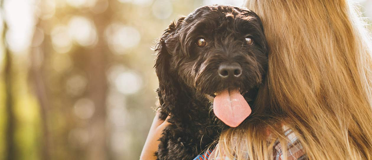 Antiobiotic and Probiotic use in pets - Blackmores