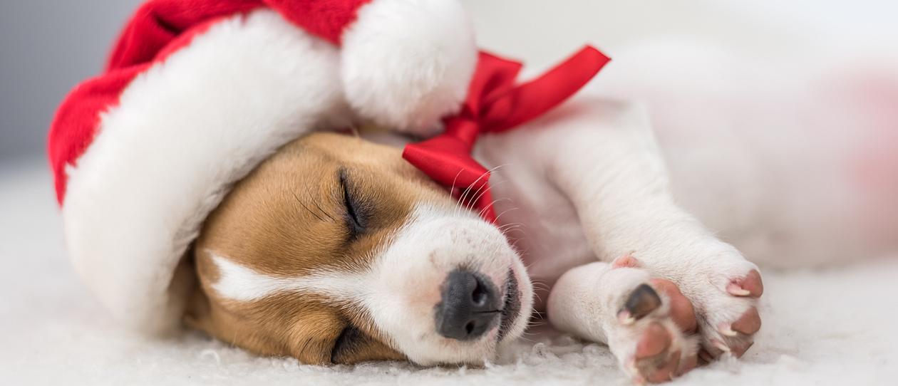 Christmas Ideas.Clever Canine Christmas Ideas Blackmores