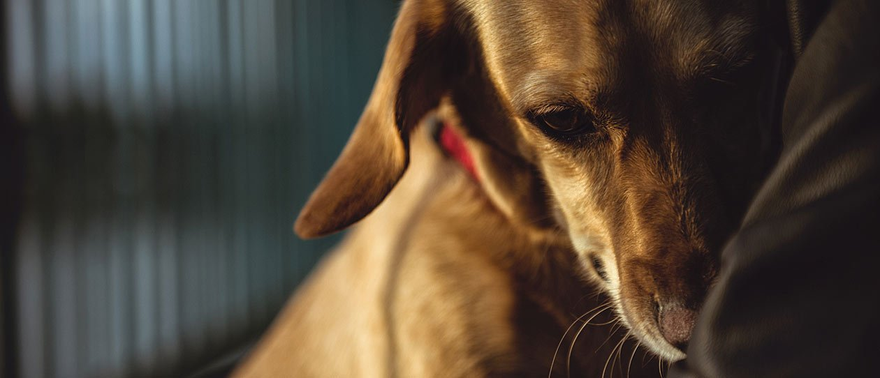 Does your dog grind his teeth? Find out why | PAW by