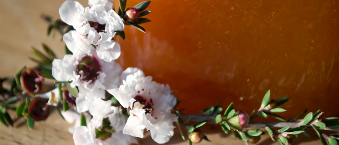 how-manuka-honey-helps-heal-your-pet2-thumb