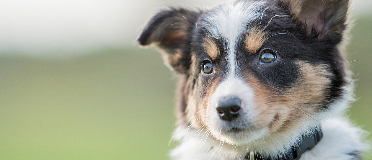 Most popular pet names in Australia