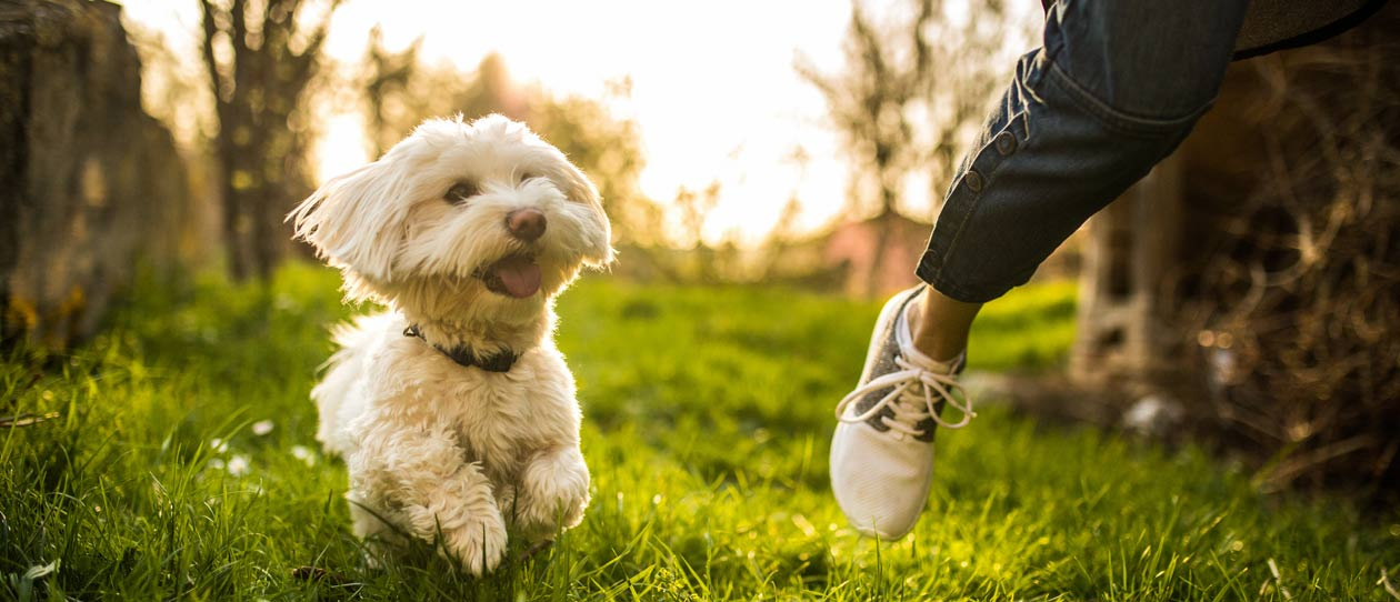 Pets need exercise too | Blackmores