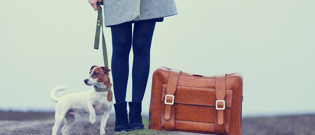 Tips for travelling with your pets - PAW by Blackmores