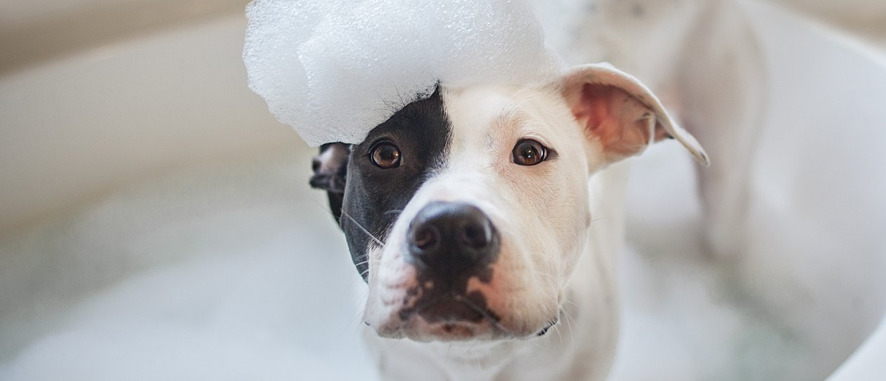 Why dog grooming is good for your dog