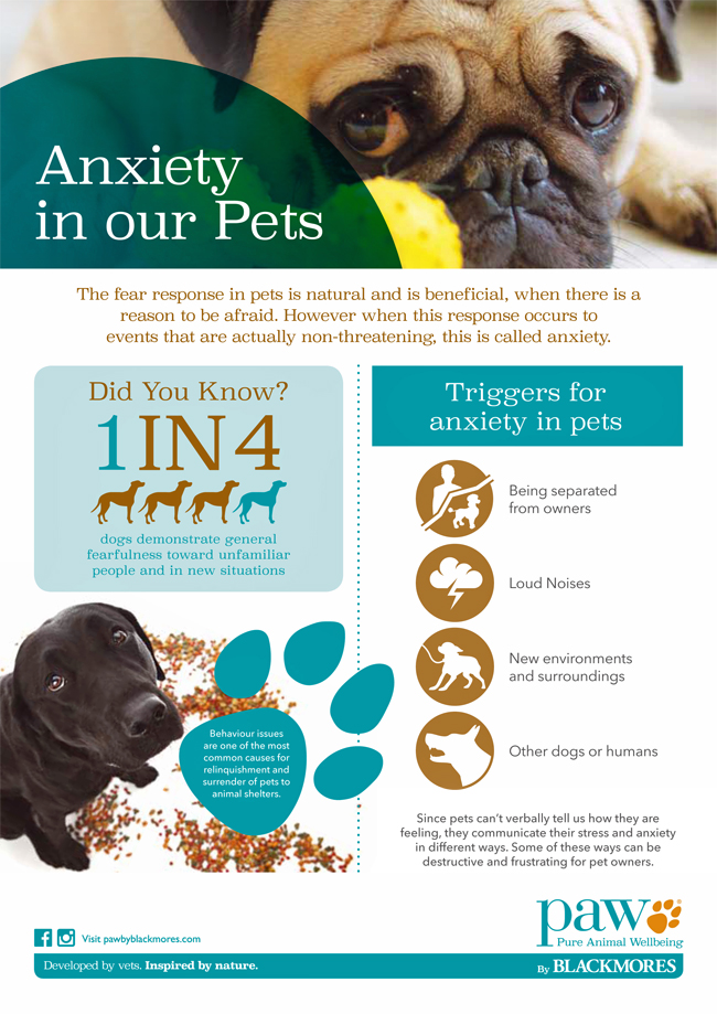 INFOGRAPHIC - Anxiety in our pets