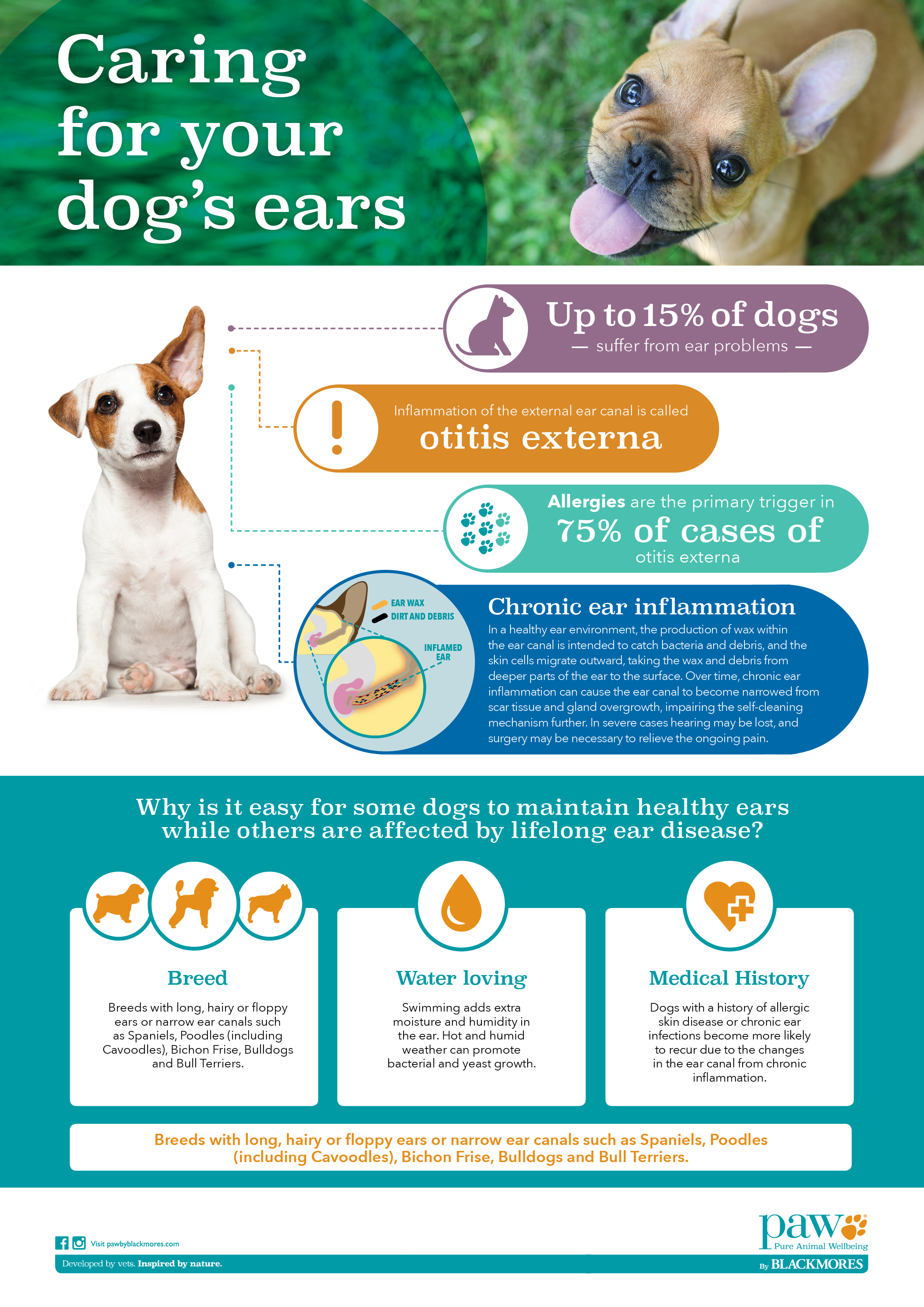 INFOGRAPHIC - How to care for your dog's ears