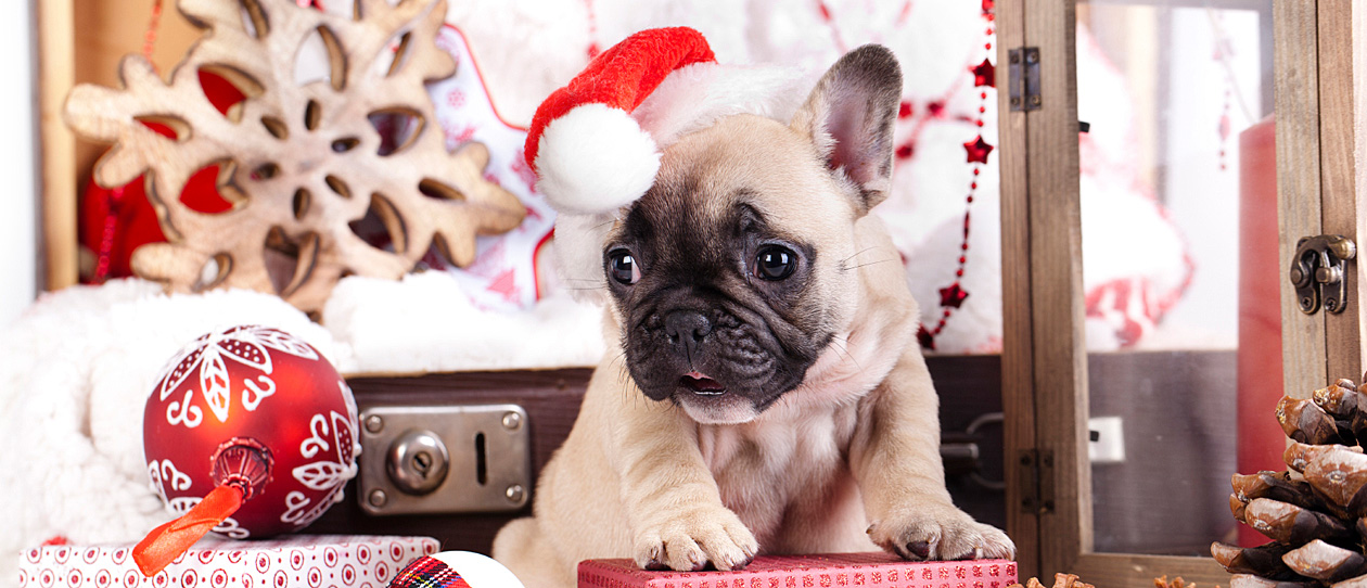 keeping your pooch safe this christmas main