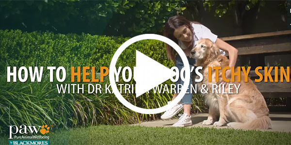 how-to-help-your-dogs-itchy-skin-video-feature