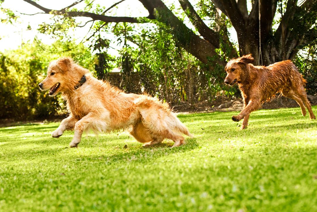 Best Dog Breeds For Long Distance Running